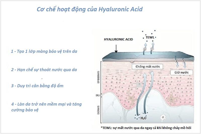 tác dụng của Hyaluronic acid trên da